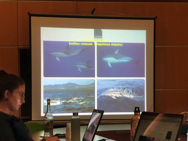 Campagna di Ricerca e studio dei Cetacei nel Mar Jonio Lucano